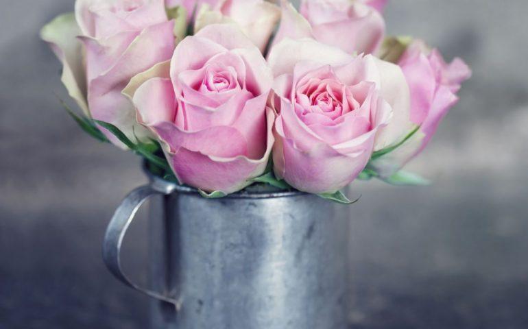 Lịch sử và ý nghĩa của hoa cúc